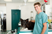 Buying A Veterinary Practice
